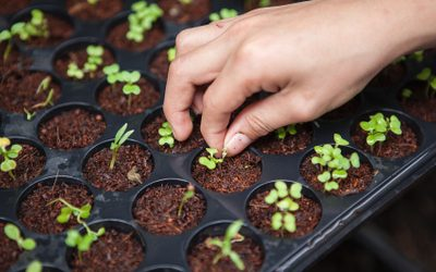 Seed innovation for plant health