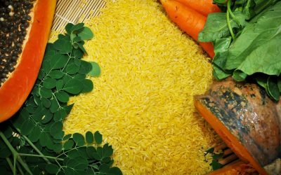 Philippines approves golden rice for food, feed& processing – a step towards eradicating VAD