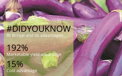 BtBrinjal can change the face of agriculture in developing countries like Phillippines and India because of its huge economic advantage.