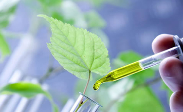 Western Times – Need for Biotechnology (GM Crops) in India, Dr Shivendra Bajaj -FSII