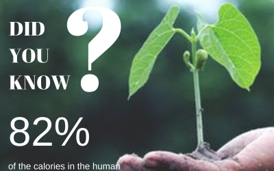 Here's why you should care about planthealth and support seed innovation through biotechnology for healthy food. #IYPH2020