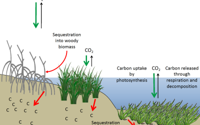 Using crops and wetlands to absorb Carbon from atmosphere