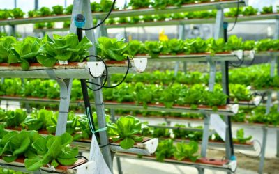 Importance of Advances in Vegetable Cultivation