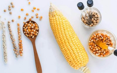Why GMOs Are A Viable Solution to World Food Hunger?